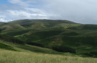 Cheviot 2-crop